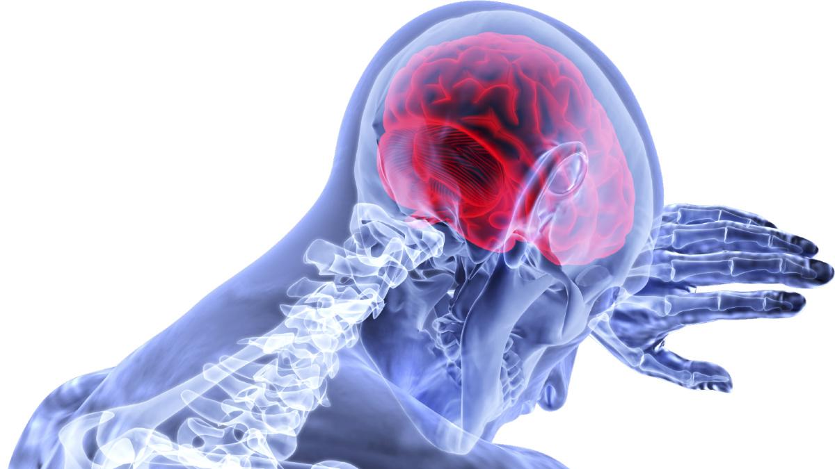 Cervello-midollo.jpg